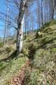 … stieg den spärlich bewaldeten Hang neben dem Keixengraben in Serpentinen bergan.