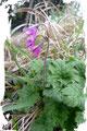 Dennoch kam die Flora nicht zu kurz. Wie auch immer diese Blume heißen mag? Hier wird Hilfe von dir verlangt! Ja, genau du! Schreib mir bitte!