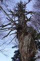 Solch skurillen Baumformationen habe ich zuletzt in einem der Harry Potter Filme gesehen.