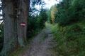Darauffolgend wanderte ich den herbstlich, goldgefärbten Mischwald, über  moderat ansteigende, jedoch  weitläufigen  Kehren höher.