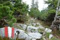 Am höchsten Punkt der Anhöhe drehte der Wegverlauf nach links weg. Durch die gut ausgeschnittenen  Latschengassen folgte ich dem Weg weiter  Richtung Gamsmauer.