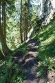 Die wärmenden Sonnenstrahlen konnte ich nicht sehr lange genießen, denn nach wenigen Minuten ließ mich der Wergverlauf in den Wald eintauchen.