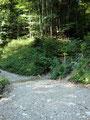 Dieser brachte uns fast schnurgerade den bewaldeten Berghang empor bis zur nächsten Waldstraße.