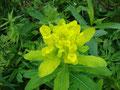 ... und wunderschöner Alpenflora.