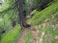 Der Wandersteig führte uns die nächsten Meter durch einen licht bewachsenen Bergwald hindurch …