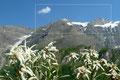 """Das """"Fischbachhorn"""" oder Große Wiesbachhorn (3564m) in der Glocknergruppe der Hohen Tauern zählt mit Sicherheit zu den ganz großen Bergzielen der Ostalpen. Gleich nach der Ankunft auf der Ebenmattenalm zog das Antlitz auch mich in seinem Banne."""