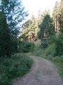 ... mussten wir diese Forststraße auf dem Weg zur Spitzelsteinalm queren.