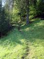 ... bei der es unmittelbar danach rechts hinauf in den Bergwald ging.