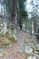 Immer wieder waren Steigspuren erkennbar.  Letztendlich wurden wir auch fündig - Ein Steig! Er leitete nach Norden in ein Waldstück hinein.