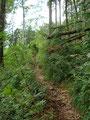 … in weiterer Folge wieder durch saftig grünen Laubwald, immer dem Valerieweg folgend.