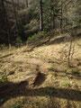 Über den Waldgraben ...
