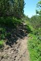 """… der jetzt nunmehr eher einem """"Kuhtrampelpfad""""  ähnelnde Steig abermals in Latschengestrüpp eintauchte."""