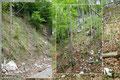 … ich auf einen eventuellen Jagasteig aufmerksam wurde. Fortan folgten wir diesen links über die Böschung hinauf in den Mischwald. Eigenartige Farbstriche auf Bäumen markierten vermutlich dieses Steiglein.