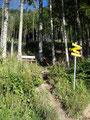 Nach wenigen Metern zweigten wir von der Forststraße auf einen kleinen Wandersteig ab.