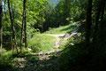 Wenige Meter dieser entlang, dann wiederum links abbiegend in einen Waldsteig, …