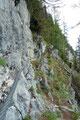 Ab dem markanten Felsentor  fiel der Steigverlauf durch die schroffe Südflanke des Hechlsteins zu den versicherten Passagen hin etwas ab. Vorsichtig händelten wir uns dem Drahtseil entlang und …