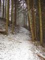 ... bevor es in einigen Serpentinen den bewaldeten Berghang empor ging.