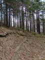 ...in etwa ca. 200m vor dem Brunnlahngang, wo sich der eigentliche Einstieg zur Hubertushütte befand.