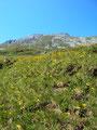 An satten, blühenden Almwiesen vorbei, mit der Lungauer Kalkspitze im Hintergrund, startete ich meine Tour.