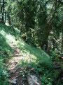 Die weiten Serpentinen folgend marschierte ich, mal auf einer Lichtung, ...