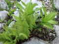 ... und wunderschöner Bergflora ...