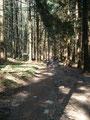 … und anschließend wieder durch den Wald.