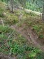 Über einen steilen und gut aufgearbeiteten Hang stiegen wir den Steig Nr. 679 talwärts, …