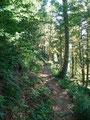 … schon folgten wir wieder dem gut ausgetretenen Waldsteig weiter Richtung Wildgößl, unserem ersten Tagesziel.