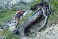 Ein gefällter Baum wurde sogar mit einem Tritt und ein Haltegriff versehen, obwohl ansonsten der Steig für mich eher verwahrlost wirkte. Gabi kostete die Überstiegshilfe sogar ein Lächeln.