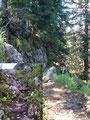 Über einige harmlose, aber bei Nässe rutschige Felsstufen erreichten wir die …