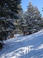 Um meinen heutigen Gipfelsturm zu vollenden, wendete ich mich nach links weiter in den Wald hinein.
