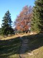 Entlang des wunderschön, durch den Herbst gefärbten Pfades ...