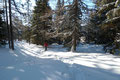 … dann durch eine Senke mit lichtem Baumbewuchs zurück in Richtung der Gamshütte nach Südwesten.