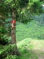 Immer den Sommer- und Wintermarkierungen folgend wanderte ich entlang des Riednerbaches weiter in das Tal hinein.