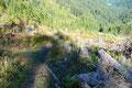 Der Wegwart und auch die Forstarbeiter hatten sich hier wirklich viel Mühe gegeben und den Steig wieder in Schuss gebracht.