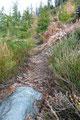 … welcher mich in engen steilen Serpentinen durch Heidelbeerstauden und Jungbaumbestand schnell einige Höhenmeter sammeln ließ.