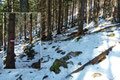 … tauchten wir in den Namensgeber des Abstieges, den Präwald ein. Um weiterhin vorankommen zu können mussten wir uns von unseren Schneeschuhen trennen. Also rauf damit auf den Rucksack.