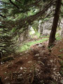 Der steil abfallende Waldsteig wurde des Öfteren auch mit den all bekannten  …
