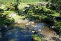 """Das vom tiefen Boden schon gewohnte """"Stein zu Stein"""" hüpfen setzte sich bei der Überquerung des Baches sozusagen weiter fort."""