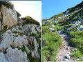 Von der Scharte führte der Steigverlauf über die eine oder andere Felsstufe eher gemütlich, aber steil in engeren Serpentinen den grasigen Nordhang zum gipfelkreuzlosen höchsten Punkt empor.
