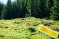 Ich hielt mich nicht lange auf, wandte mich dem weiteren Aufstieg zu und wanderte in einem leichten Linksbogen wiederum in den Wald hinein.
