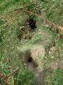 Einen Murmeltierbau um den anderen konnten wir am Wegesrand beobachten. Aber wo waren sie?? Kein einziges Rascheln, Pfeiffen oder ähnliches war zu hören – vorverlegter Winterschlaf?