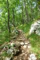 … marschierte viel lieber den Waldpfad weiter bergwärts. Zu meiner Überraschung war ich an diesem Tage ganz alleine auf weiter Flur unterwegs.
