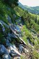 Sozusagen über Stock und Stein leitete mich der Steig  über den latschenbewachsenen Westhang zur Stuhlalm hinunter, wo man wieder auf den Austriaweg trifft.