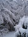 Die Äste bogen sich unter der Schneelast. Einfach nur Winter pur!