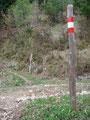 … die nächste Forststraße war zu überqueren und …