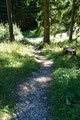 … die nächste kurze Abkürzung durch den Wald.