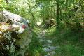 Mal durch schattigen Wald, dann wiederum über eine Lichtung führte mich der nunmehr breite Pfad weiter abwärts, bis …