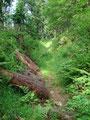 Durch eine saftig grüne, irgendwie künstlich wirkende Furche stieg ich weiter und weiter bergwärts.