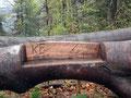 Witzige Einfälle der hiesigen Forstarbeiter. Der durch den Windwurf gefällte Baum wurde zur Rastmöglichkeit umfunktioniert.
